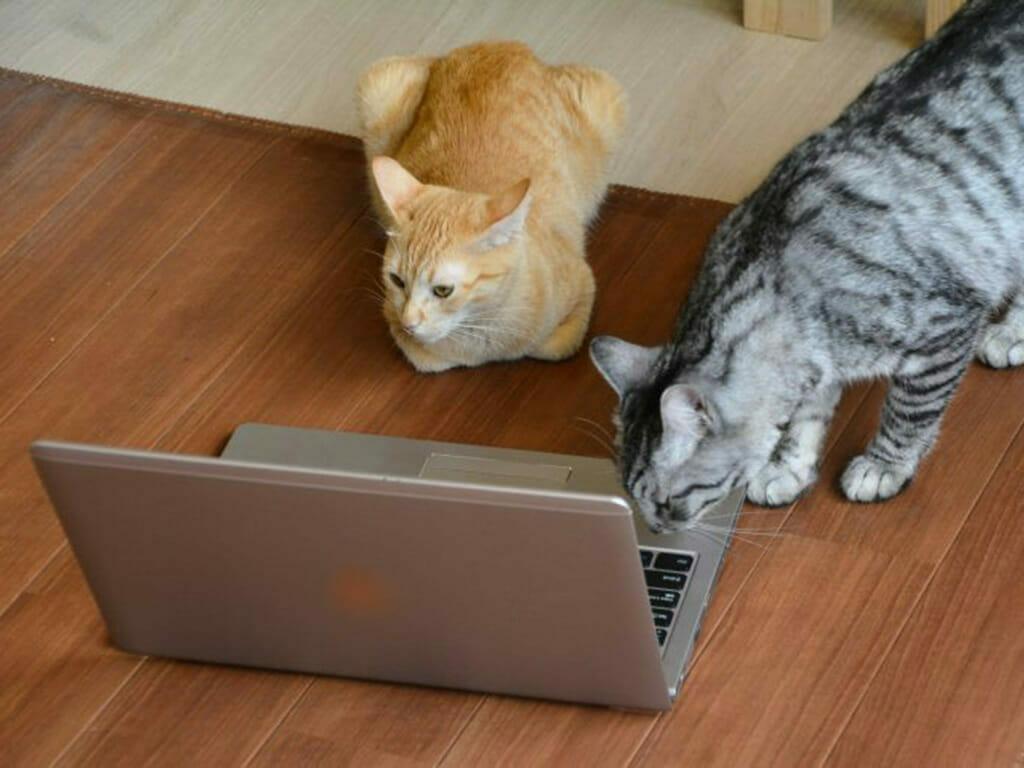 ネットにアクセスする猫