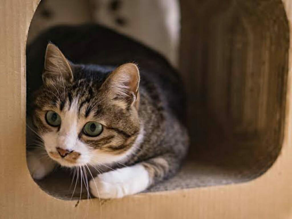 情報を吟味する猫