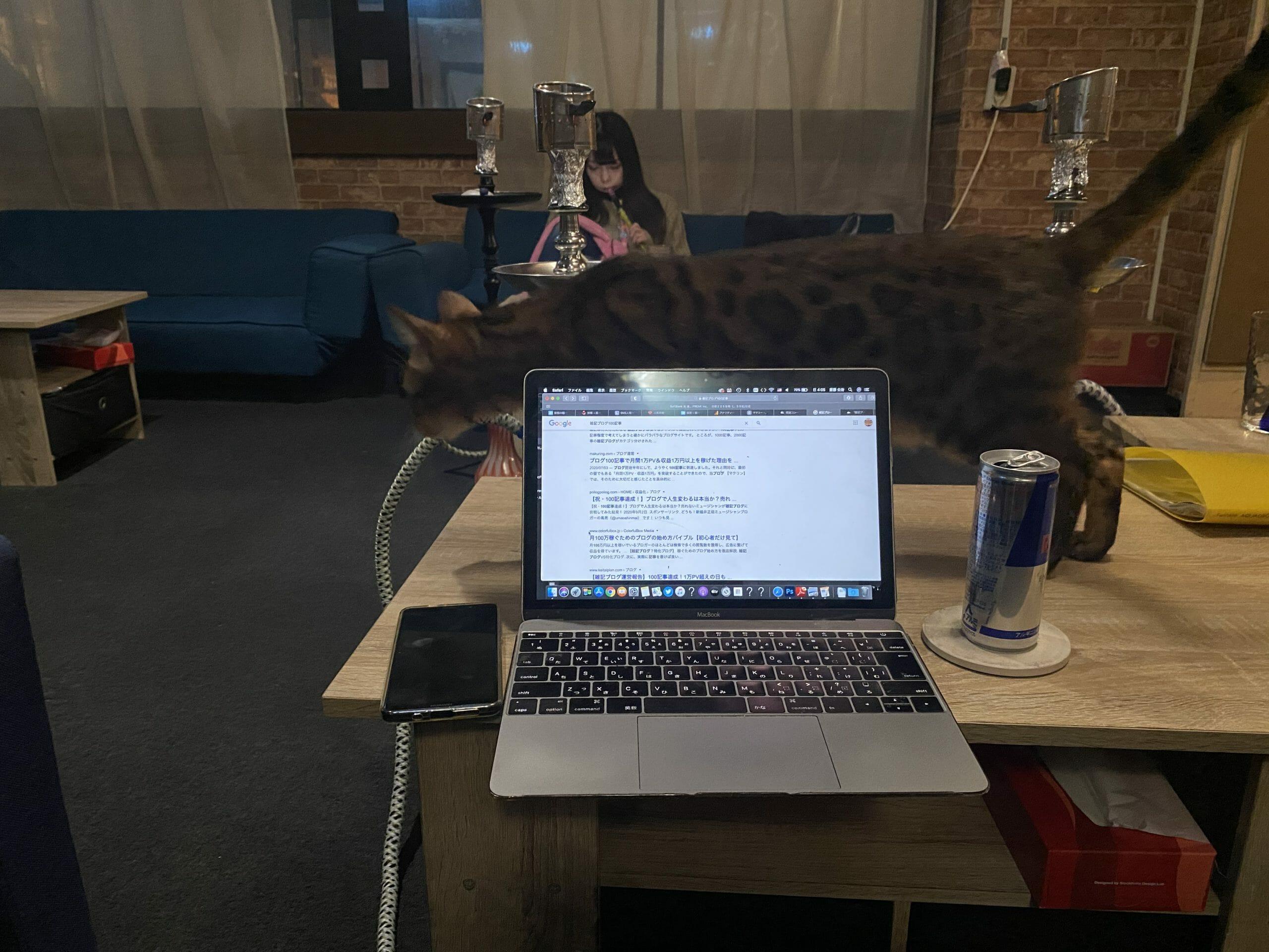 猫とシーシャとブログ